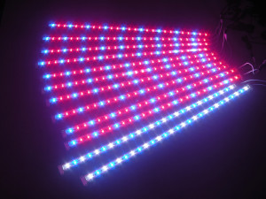 Leg grow light strip